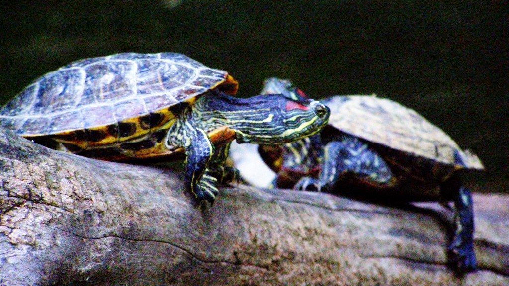 Slow and steady wins the race….